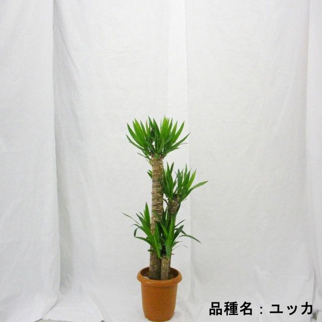 【観葉植物】おまかせ