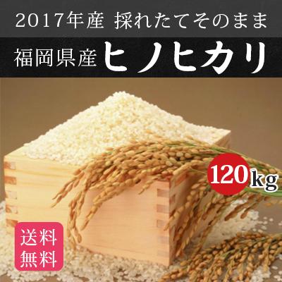 \新米/【送料無料】 2017年産 新米 福岡県産 武下さんちの元気なお米 「ひのひかり」 120kg