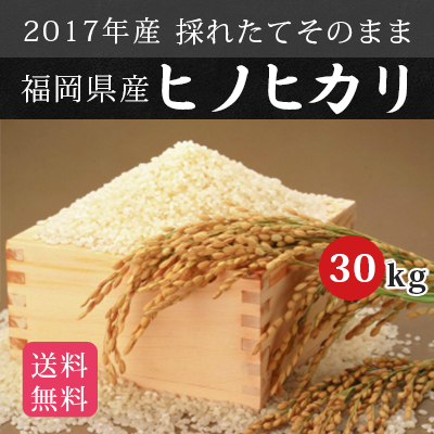 \新米/【送料無料】 2017年産 新米 福岡県産 武下さんちの元気なお米 「ひのひかり」 30kg