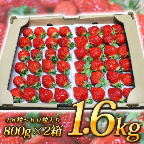 48粒~60粒入り800gx2箱 1.6kg入り