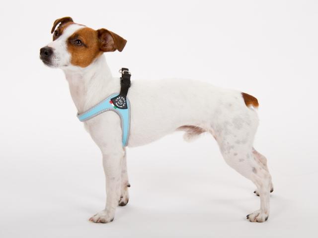 こすれない小型犬用ハーネス|Fibbia Tre Ponti トレ・ポンティ|犬グッズ通販HAU
