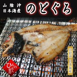 のどぐろ(アカムツ)(中) 山陰沖日本海産(鳥取県・島根県産)