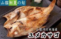 干物(単品)ユメカサゴ 山陰沖日本海産(鳥取県・島根県産)