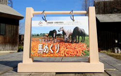 馬めくり 万年カレンダー(北海道和種馬保存協会)