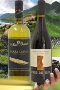 B501 いつも飲むからこんな酒 農業回帰アブルッツォの上質デイリーワイン