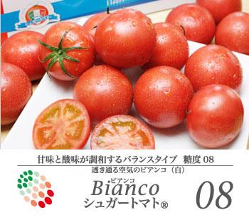 【送料無料】シュガートマト糖度8ビアンコ【約0.8〜1kg(12〜20玉)】
