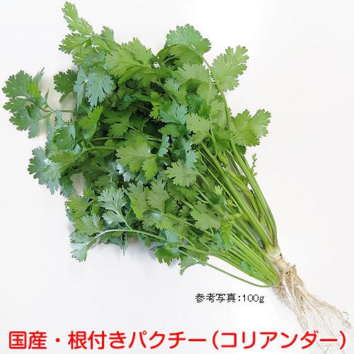 ハーブ野菜・国産パクチー(コリアンダー・シャンツァイ・香菜)の販売店