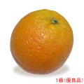 愛媛県産カラカラオレンジ(ピンクネーブル・果実・くだもの)の販売店