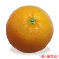 愛媛県産いよかん(伊予柑・果実・くだもの・オレンジ)の販売店