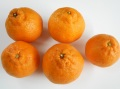 柑橘類の王様 デコポン【1kg】