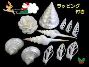 ☆クリスマスシェルセット☆(ラッピングサービス!!)