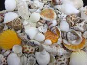 海の贈り物ミックス【約1〜5cm/約500g】貝殻・シェル・二枚貝・巻貝