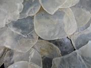 カピス【約8〜10cm/約1kg】貝殻・貝・シェル