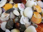 二枚貝ミックス【約2.5〜7cm/約500g】貝殻・シェル・二枚貝・2枚貝