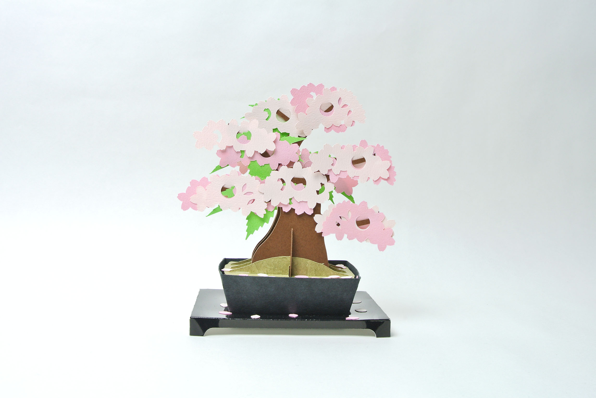 kami-bonsai 桜