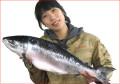 【送料無料】 時しらず1尾(北海道道東産・生冷凍(無塩)2.8kg〜)