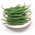 ◆冷蔵◆生青唐辛子「辛口」1kg■韓国食品■ 0601