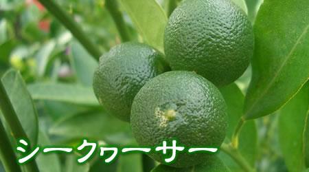 沖縄産 シークヮーサー
