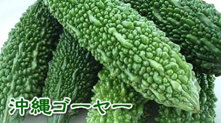 沖縄産ゴーヤー(3kg入れ)