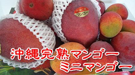 沖縄産 完熟マンゴー(約2kg入れ)贈答用