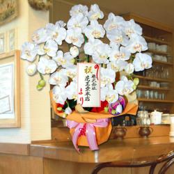祝お祝いラッピング 造花胡蝶蘭 「光触媒加工済み」
