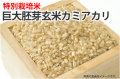 巨大胚芽玄米カミアカリ