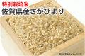 特別栽培米佐賀県産さがびより