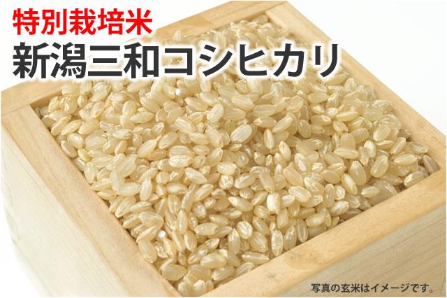 特別栽培米新潟三和コシヒカリ