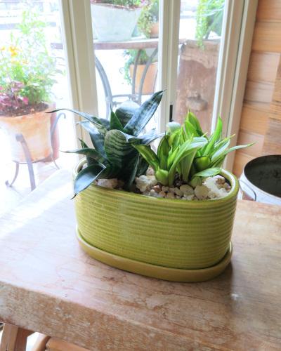 0308観葉植物ギフト サンスベリアのグリーン鉢(ペア)