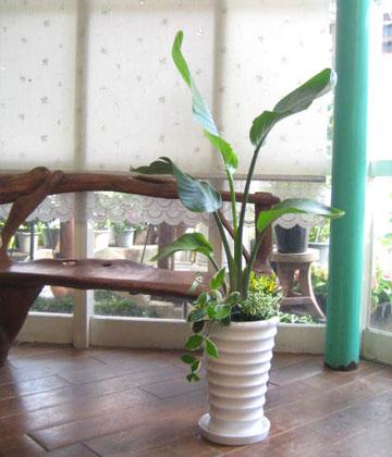 【送料無料でご予算ラクラク】観葉植物ギフト お祝いにピッタリ!オーガスタ寄せ植え
