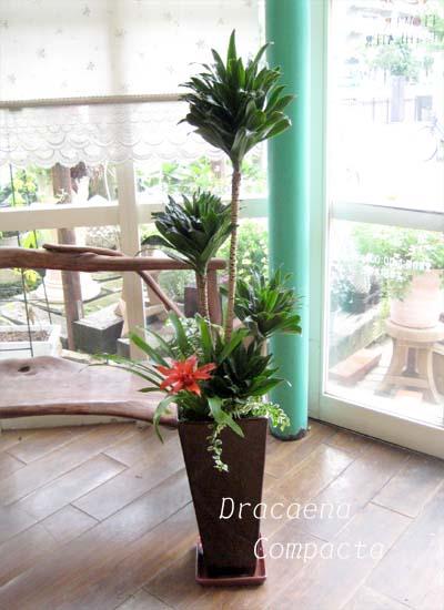 0039観葉植物ギフトこだわりの渋かっこいいブラウン鉢コンパクター