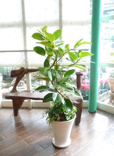 0052観葉植物ギフト アルテシーマのミニ観葉寄せ植え