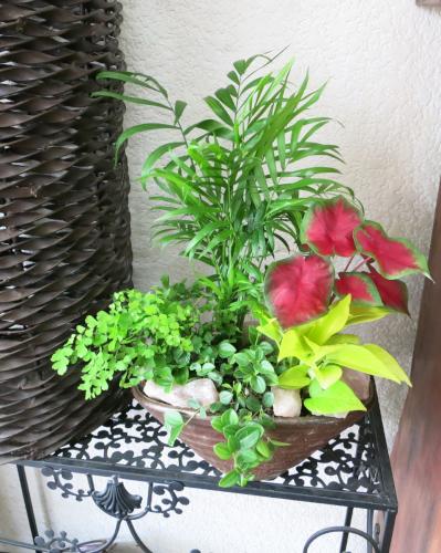 0151インテリア観葉植物ギフト  ~和ジアン ミニ観葉カラフル寄せ植え 舟形鉢~