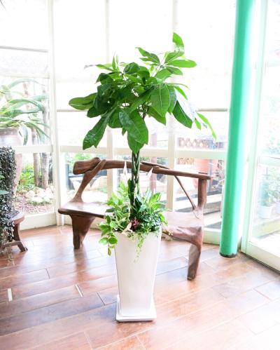 0110観葉植物ギフト パキラと華やかミニ観葉