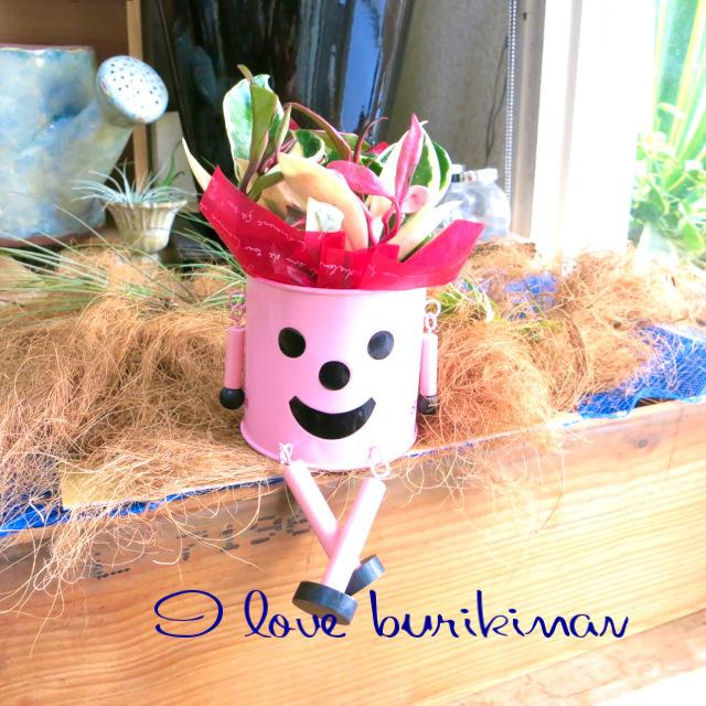 かわいい観葉植物ギフト ブリキマン(ピンク)とサクララン