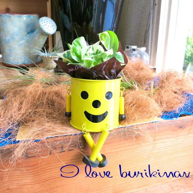 かわいい観葉植物ギフト ブリキマン(イエロー)とポトスエンジョイ