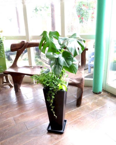 0024インテリア観葉植物ギフト  モンステラ ブラックロング鉢