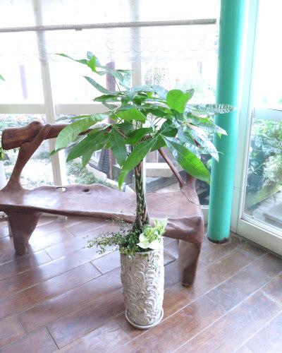 0106観葉植物ギフト パキラとリーフ柄鉢
