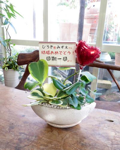 インテリア観葉植物ギフト  ダブルハート★結婚の御祝におすすめ