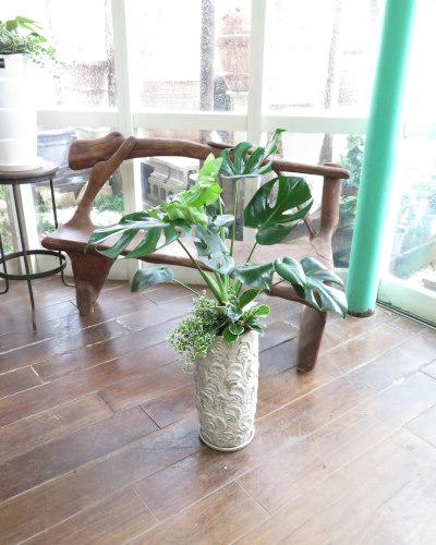 0105観葉植物ギフト モンステラとリーフ柄鉢
