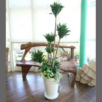 0041【送料無料でご予算ラクラク】観葉植物ギフト コンパクターとミニ観葉
