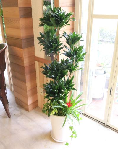 観葉植物ギフト コンパクターのホワイト鉢(大きいサイズ)≪商品番号0298≫