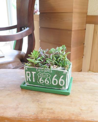 多肉植物66(グリーン横長鉢)≪商品番号0290≫