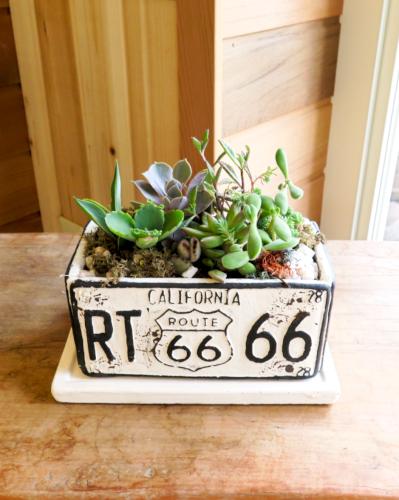 多肉植物66(ホワイト横長鉢)≪商品番号0291≫
