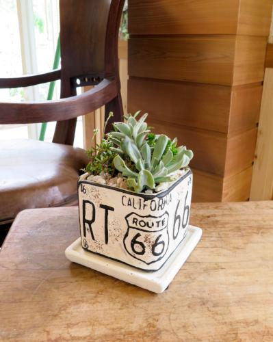 多肉植物66(ホワイト正方形鉢)≪商品番号0293≫