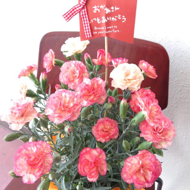 5/5まで早割☆お日様みたいなカーネーション【送料無料母の日ギフト】