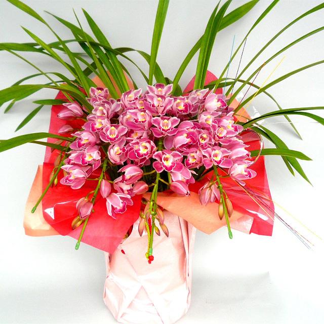 早割り【送料無料/迎春好適品】~シダレ型シンビジューム(ピンク系)~