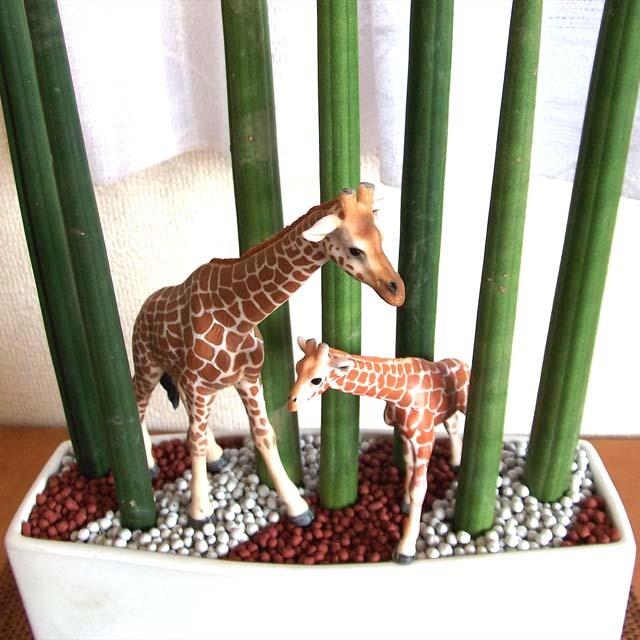 0137【送料無料・アニマルガーデン】観葉植物ギフト 親子キリンとサンスベリアスタッキー