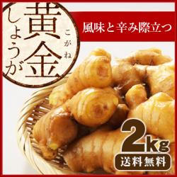 【送料無料】高知県産 黄金生姜(こがねしょうが) 2kg ≪ 国産しょうが専門 坂田信夫商店のこだわりの黄金しょうが≫