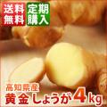 高知産黄金生姜4kg 定期購入